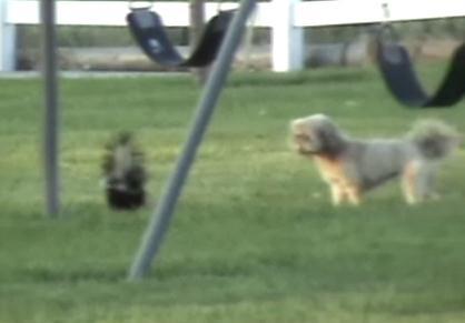 スカンク vs. 犬