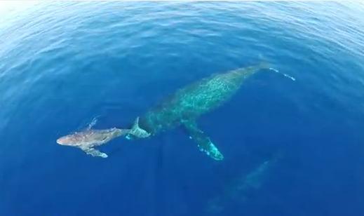 カメラ搭載ラジコンヘリでイルカとクジラの撮影