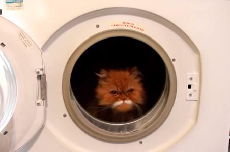乾燥機に入ってくつろぐニャンコ