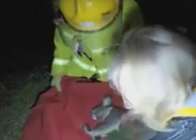 負傷して気絶したコアラ、懸命な蘇生で息を吹き返す