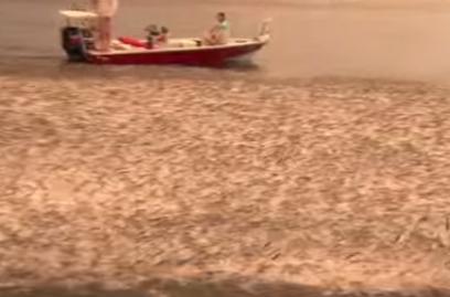 ボラの大群を襲うサメ