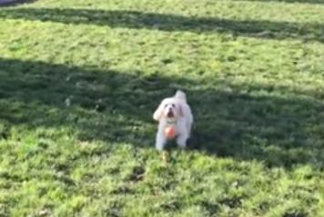 ボールのバウンドを予測してジャンプするワンコ