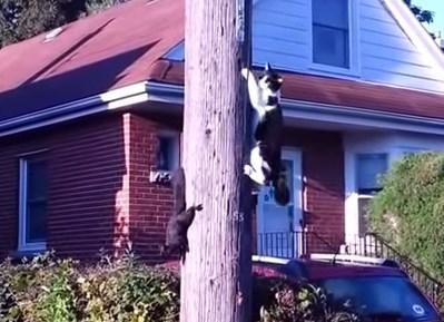猫 vs. リス 身軽さでニャンコを上回るリス