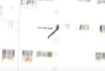 まさか!!リスが21階から大ジャンプ