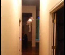 忍者もビックリ!なキツネザルの廊下の進み方