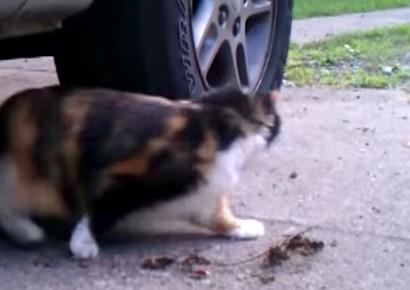 小さなネズミを必死になって追いかけるニャンコの映像
