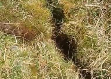 地面の亀裂に転落した子羊を救出する映像