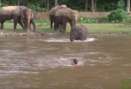 人が溺れていると助けに来てくれる優しいゾウ