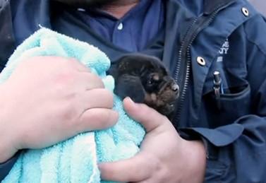 12時間以上地下のパイプから出られなくなった子犬の救助