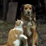 LOVE LOVE なイヌとネコ
