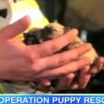 火事になった家から犬の赤ちゃんを救出した消防士