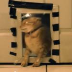 キャットドアにラップのトラップ、見事にひっかかるネコ