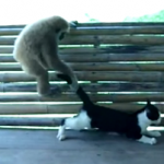 サルに可愛がられる?ネコ