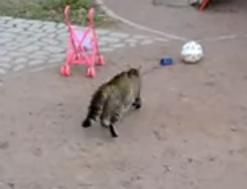 大きなワンコを目の敵にするネコ