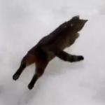 雪に消える猫