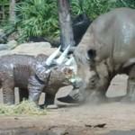 サイ vs. トリケラトプスの置物
