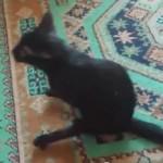ネコの妙な動き