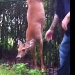 柵に引っかかって身動きの取れない鹿を救助