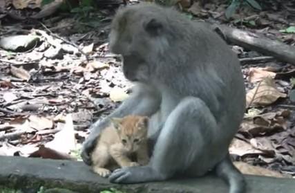 子猫を育てる猿