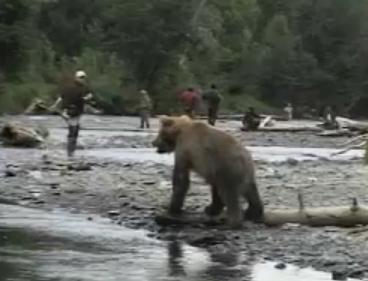 釣りを楽しむ人々の背後に熊出没