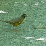 鳥 vs. ヘビ