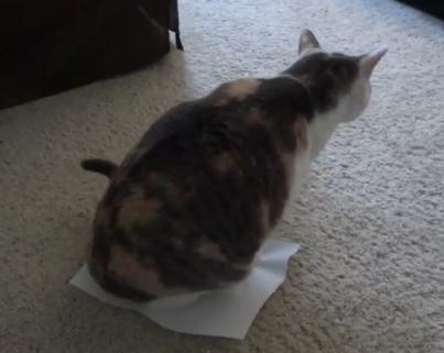 紙の上が落ち着くニャンコ