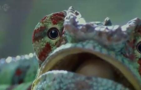 カメレオンが虫を捕らえる瞬間の映像(HD)