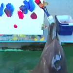 絵を描くイルカ