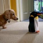 ミニチュアダックス vs. ペンギンロボ