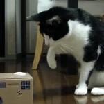 猫 vs. 猫貯金箱