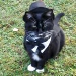 タキシード姿の猫
