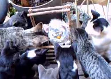 ファービーピンチ!ネコに囲まれる