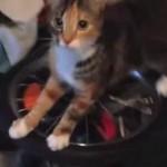 車輪で遊ぶネコ