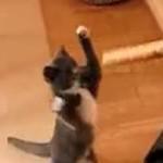 ボクシングの練習をするネコ