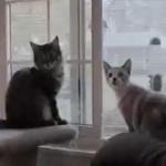 雷鳴に驚く窓際の2匹のネコ