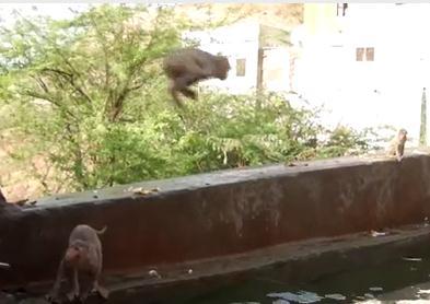 ダイビング猿