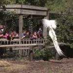 白いクジャクのジャンプに驚く子供たち