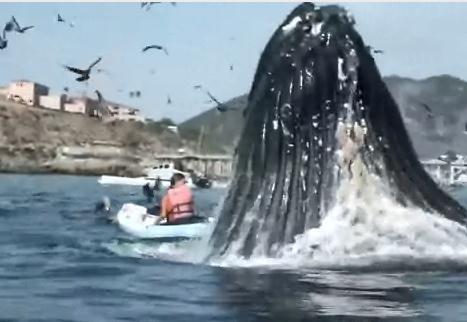 クジラの狩りに巻き込まれそうになったカヤックの女性