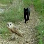 フクロウとネコのナイスな関係