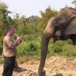 盲目の象のために音楽を演奏する男