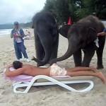 ゾウのマッサージサービス