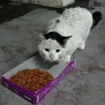 何かを喋りながら餌を食べるネコ