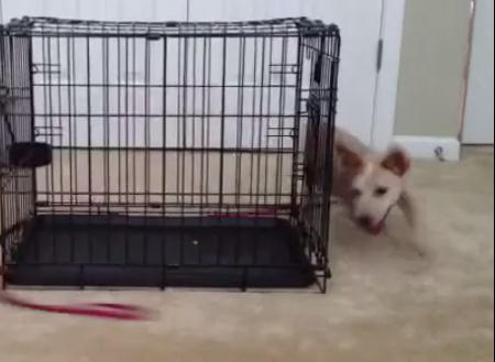 どうやっても追いつくことができない物を追いかける子犬
