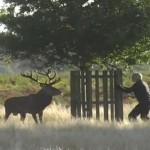 巨大な鹿に襲われる男