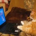 アニメを楽しむネコ