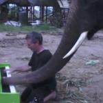 象と男のピアノの連弾