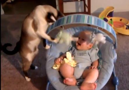 人間の赤ちゃんのおもりをする猫