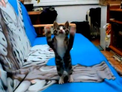 とても元気な子猫の映像