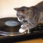 ターンテーブルで猫が面白いことになります