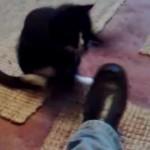 靴に凄まじい猫パンチをするネコ